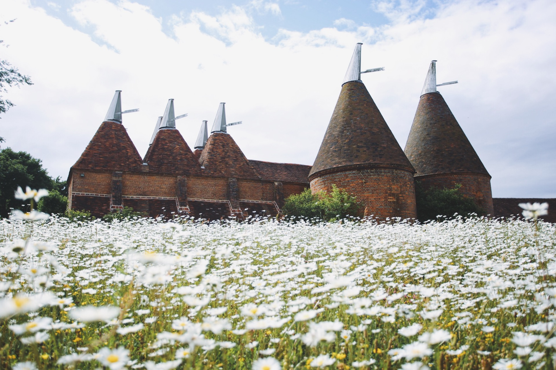 Camomile Field and Oast Houses at Sissinghurst Castle, Kent