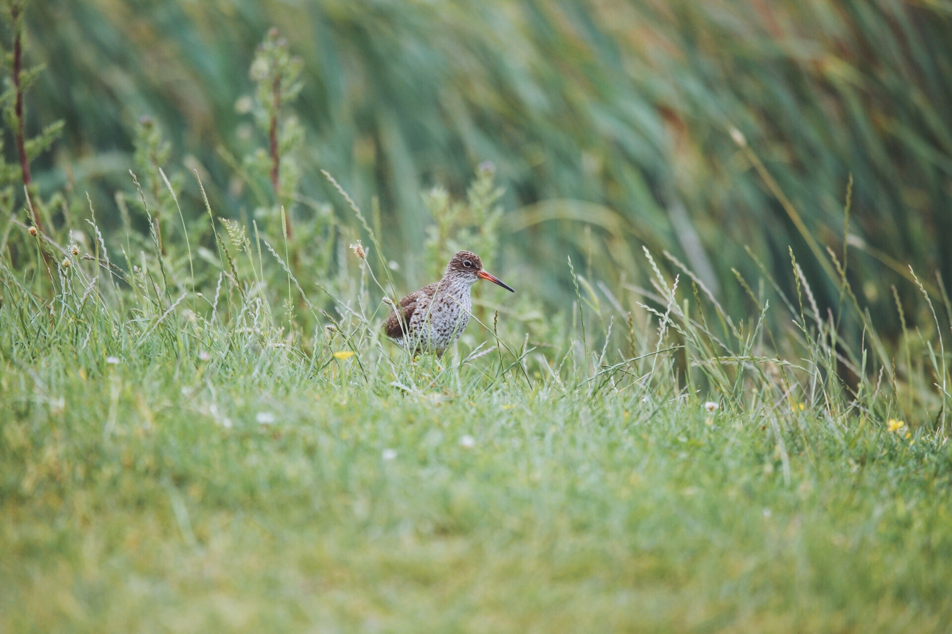 Wildlife at Elmley Nature Reserve, Sheppey