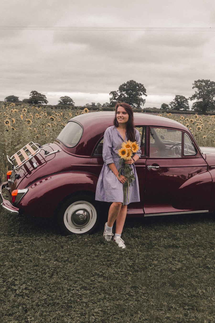 Morris Minor at Somerset Lavender Farm