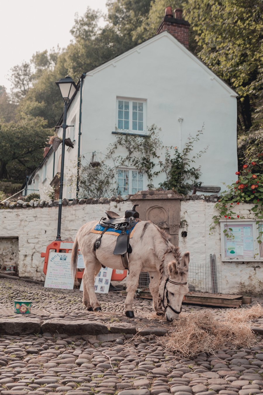 Donkeys in Clovelly, North Devon