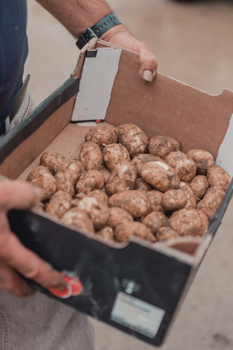 Jersey Local Produce - Manor Farm Jersey Royal Potatoes