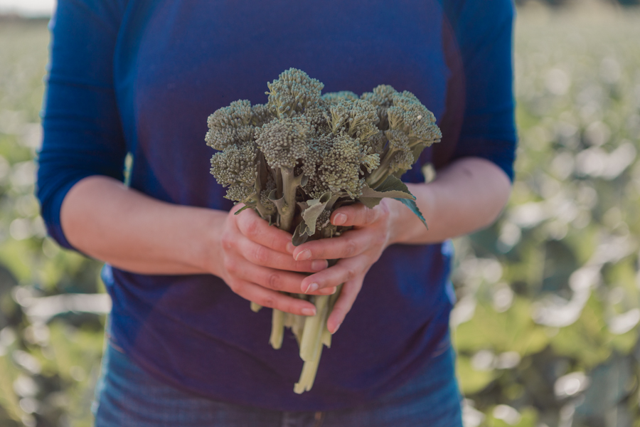 Tenderstem at Devon Villa Farm, Jersey