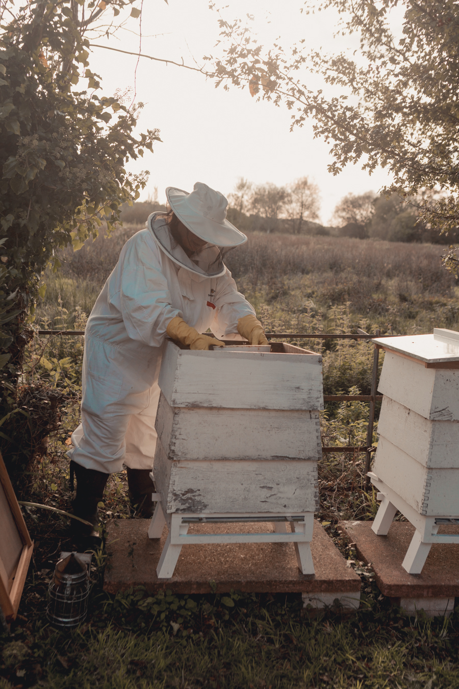 Beekeeping at Deans Court, Honey and Harvest
