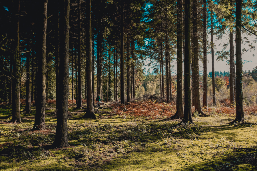 Foraging Course in the Forest of Dean, UK